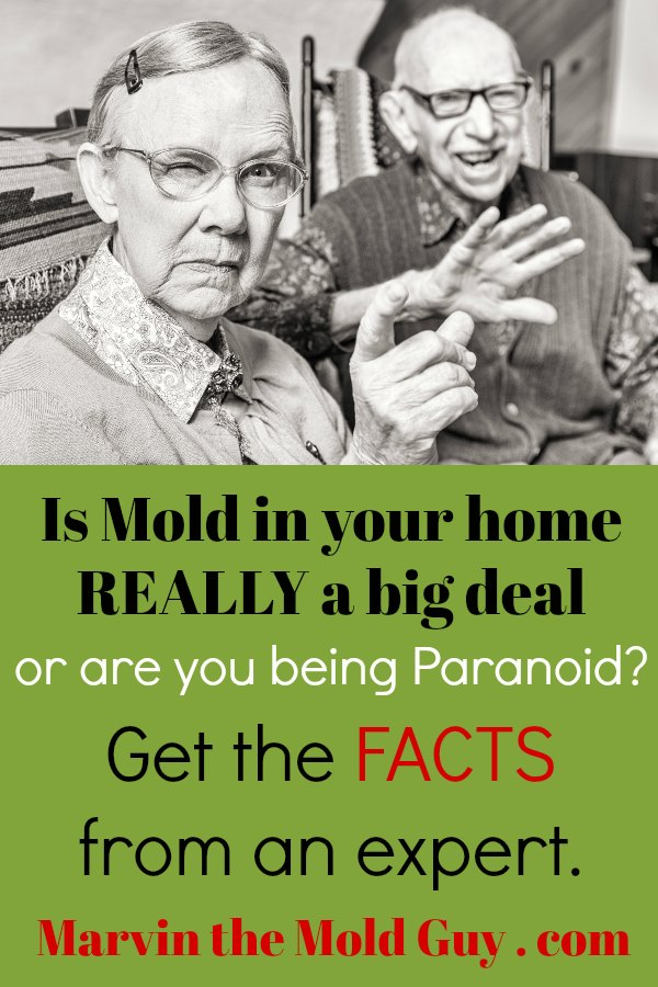 Common Mold Misconceptions | Black Mold | Get Rid of Black Mold | Is Black Mold Dangerous