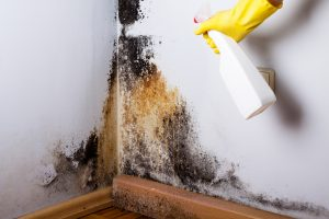 Black Mold | Indoor Mold| Remove Mold| Mold in House
