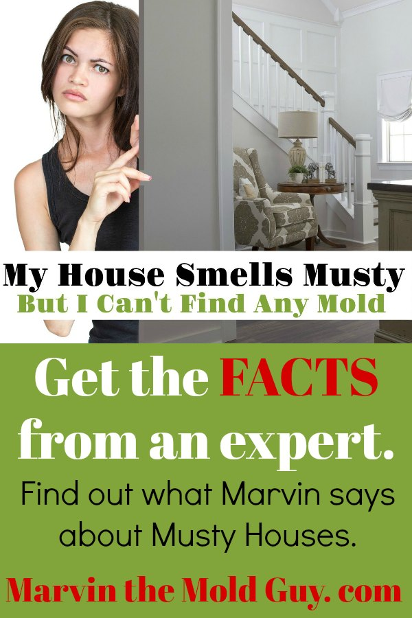 Musty Smelling House | Why Does My House Smell Musty | Black Mold | Get Rid of Black Mold
