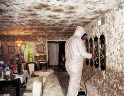 Black Mold | Removing Black Mold | Mold Harmful | Get rid of mold